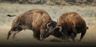 National Geographic Yellowstone Live 2019 Sweepstakes
